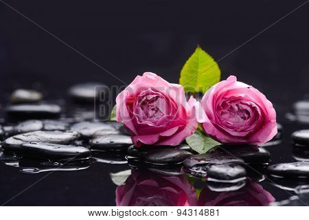 Still life with two pink rose and wet stones