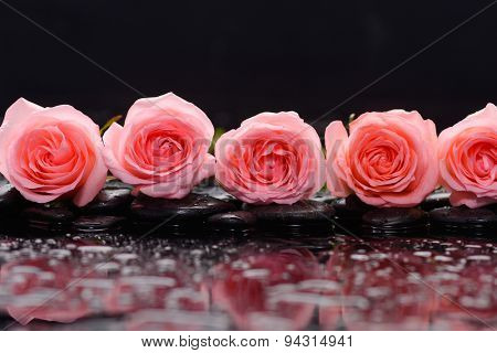 Row of pink rose and wet stones