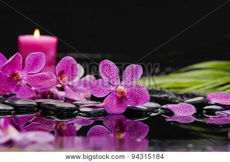Pink orchid with candle with palm on therapy stones