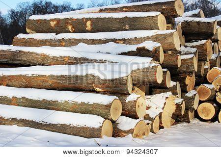 Logs in Winter