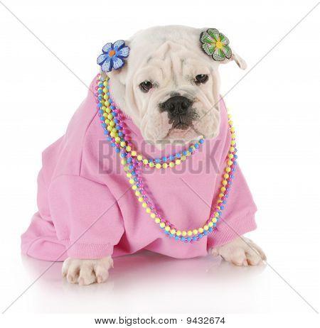 Cachorro hembra