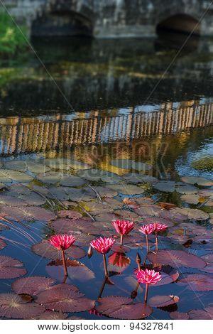 POND OF LILIES AND BRIDGE REFLECION TOBAGO OUTDOORS NATURE