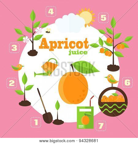 Vector illustration of a garden in the style of the flat. Planting apricot trees, harvesting, processing of apricots in the juice.