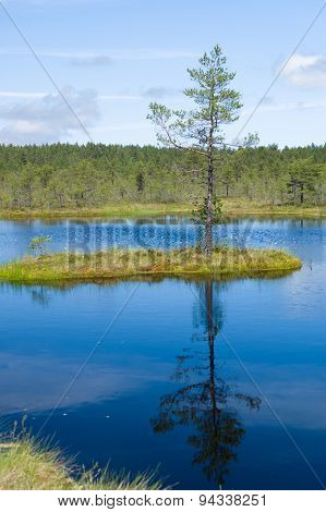 Reflection Of Small Island And Pine On Water Of Lake