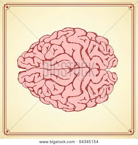Sketch Human  Brain In Vintage Style