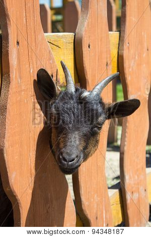 Kid With Horns In The Fence
