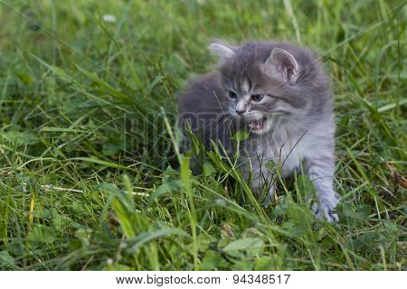 Small kitten in a grass.