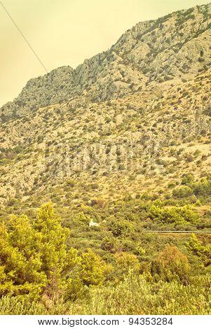 Olive Trees - Croatia - Vingage Version