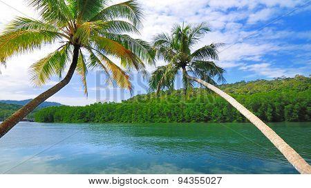 Beautiful Coconut Tree Slope Into The Sea