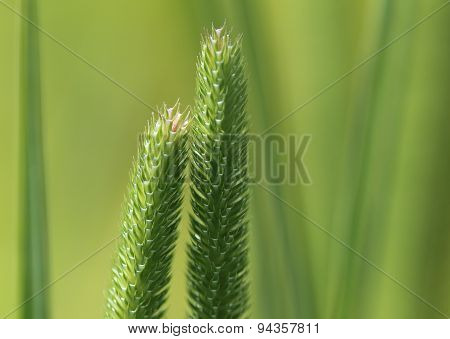 Blooming Grass background