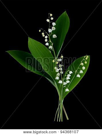 Branch Of Lily Of The Valley