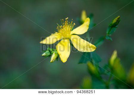 Dainty Golden Flower