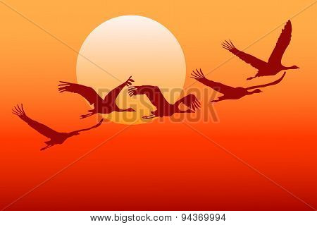 Flying crane.