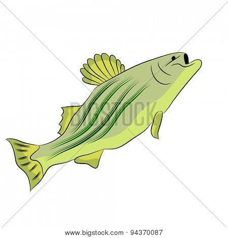 An image of a bass fish.