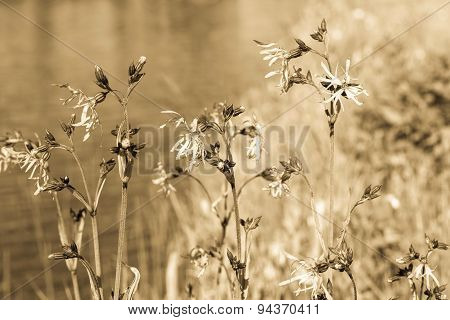 Wild Meadow Flowers On Stalks With Effect Of Aging
