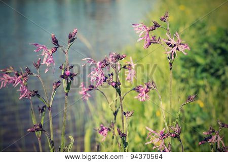 Wild Flowers On Small Stalks With A Retro Effect