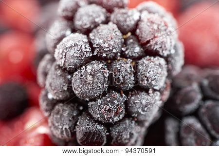 Macro Shot Of A Frozen Blackberry