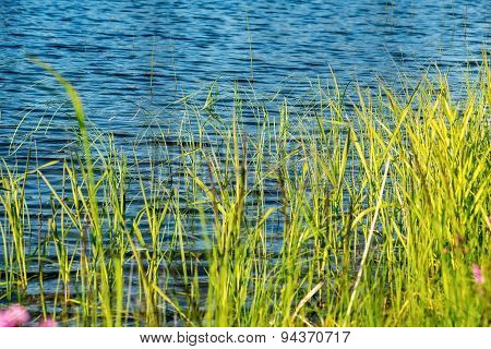 Stalks Of A Green Grass On Background Blue Lake