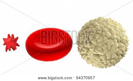 Main blood cells in scale isolated on white