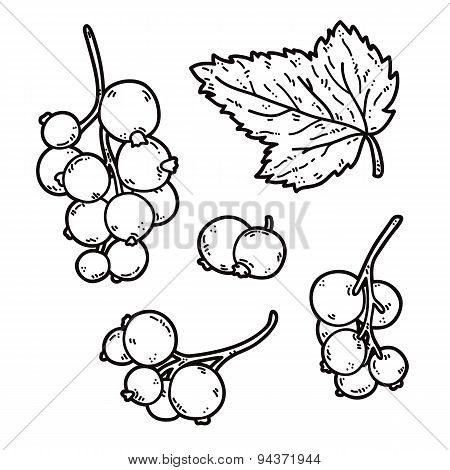 Black currant outlines