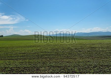 Oat Field Mountains Agriculture