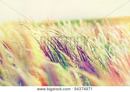 Beautiful nature - high grass