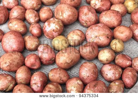 Young fresh potatoes for pattern texture and background
