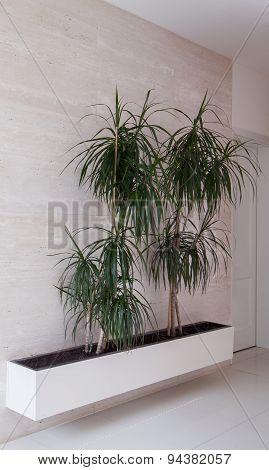 Trees In Flowerpot
