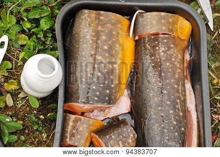 Polar Salmon For Dinner