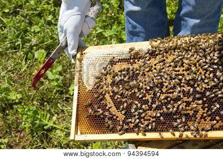 Beekeeping Closeup