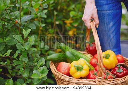 Basket with fresh vegs held by farmer