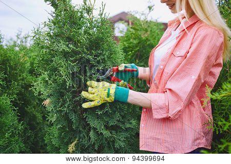 Female farmer in gloves taking care of thuja