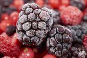 stock photo of frozen  - Macro shot of a frozen blackberry on other frozen berry fruits - JPG