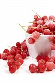 picture of ice crystal  - Frozen currants with stems are covered with ice crystals in white porcelain bowl on a white background - JPG