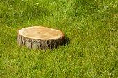 stock photo of disafforestation  - tree stump on the green grass - JPG