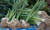 stock photo of scallion  - Garlic and Scallions fresh from the farm at the farmers - JPG