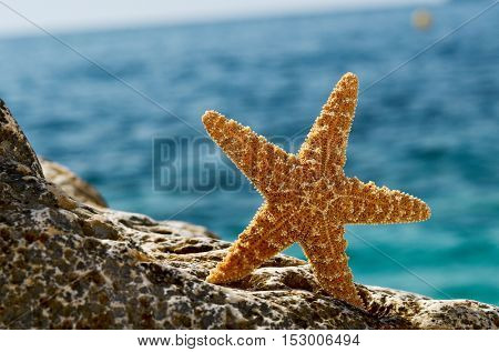 starfish on the beach in summer sunny day
