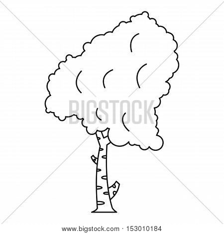 Birch tree icon. Outline illustration of birch tree vector icon for web