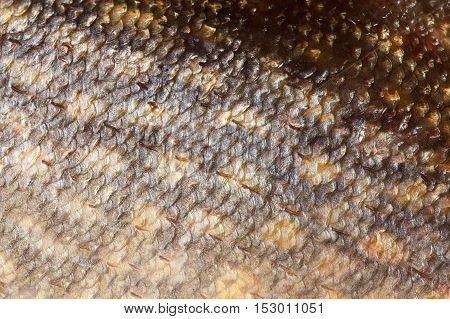 Pike fish shining scales background texture macro