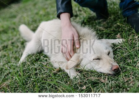 Kid Strokes A White Dog Lying on the Grass