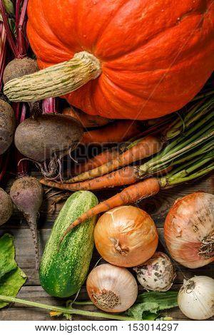 Autumn vegetables harvest
