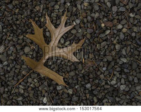 Single brown oak leaf on left side of frame on bed of gravel