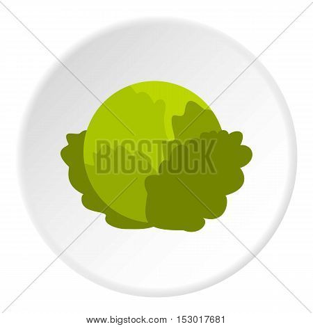 Cabbage icon. Flat illustration of cabbage vector icon for web