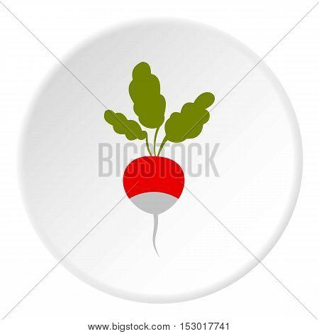 Radish icon. Flat illustration of radish vector icon for web