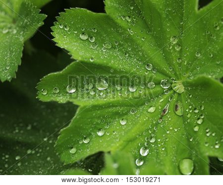 Green leaf with water drops, macro, summer day
