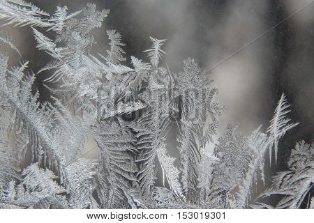 variety of frost patterns on a winter window