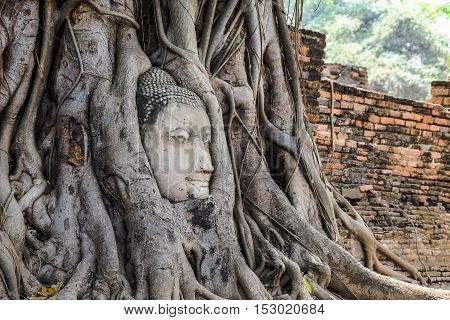 Head of Buddha statue in the old tree ancient world heritage at Thailand