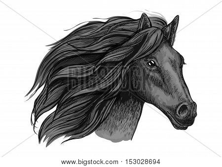 Black raven stallion running against wind. Sketched vector portrait of horse head with proud look and waving mane hairs