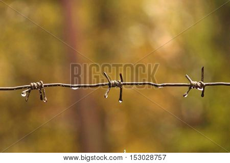 Barbed wire after rain with water drops.