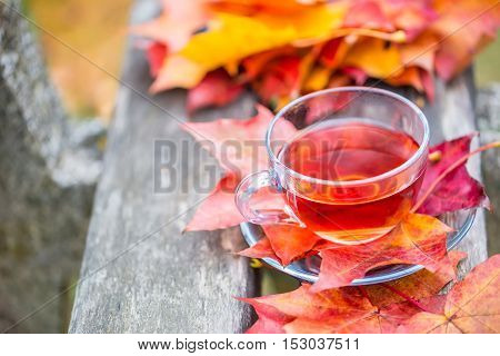 Autumn red tea. Cup of tea with autumn leaves on wooden board.
